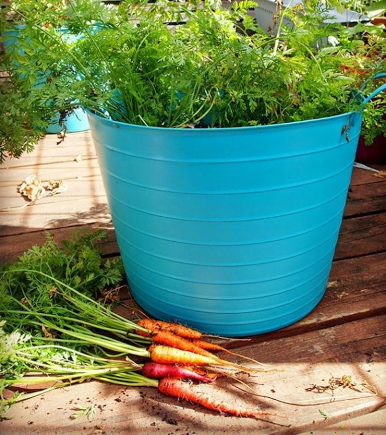 Ultimate Guide To Grow Vegetables For Home Cook Tasty Kitchenn