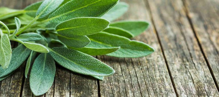 Substitutes for Sage